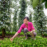 "INDIVIDUAL(S) PHOTOGRAPHED: Vi Thị Thanh. LOCATION: No. 4, Dak R'mang Commune, Dak Glong District, Dak Nong Province, Vietnam. STORY: Stepping onto the bright, red earth of her compound, Thanh greets members of the Binh Phu Farmers' Association with a confident smile, ready to chair a meeting. If you'd have met her in 2007 when she first arrived in Dak Nong Province, you'd have found a shy, troubled woman. Today, she's a different person: a well-respected community figurehead. Originally from Thanh Hoa and ethnically Thai, Thanh felt very alone here at first. But in 2012, her fortune changed when Oxfam established an ethnic minority empowerment project nearby. At first, there was resistance to a woman from a neighbouring village joining, but remarkably, four years later, Thanh serves as the group's elected leader. ""I've learned a lot"", Thanh emphasises. ""I was trained in coffee growing techniques and poultry breeding"", she goes on, referring to the technical assistance provided by the district-level Farmers Union and the Centre for Community Empowerment (CECEM) in collaboration with Oxfam. ""I soon started feeling much more confident about getting better prices. In 2015, I had enough money to buy two cows"". Thanh has also gained valuable leadership skills, and her improved organisational skills have helped to unite different ethnic communities. Assisted by CECEM, she has successfully organised cultural gatherings to promote ethnic traditions. Events like 'Awaken Your Heritage!' have brought together many of the district's different ethnic groups. ""Everyone feels prouder of their traditions"", she asserts. ""We understand each other better now, and share more"". Thanh's increased confidence has certainly had a powerful impact on the wider community."