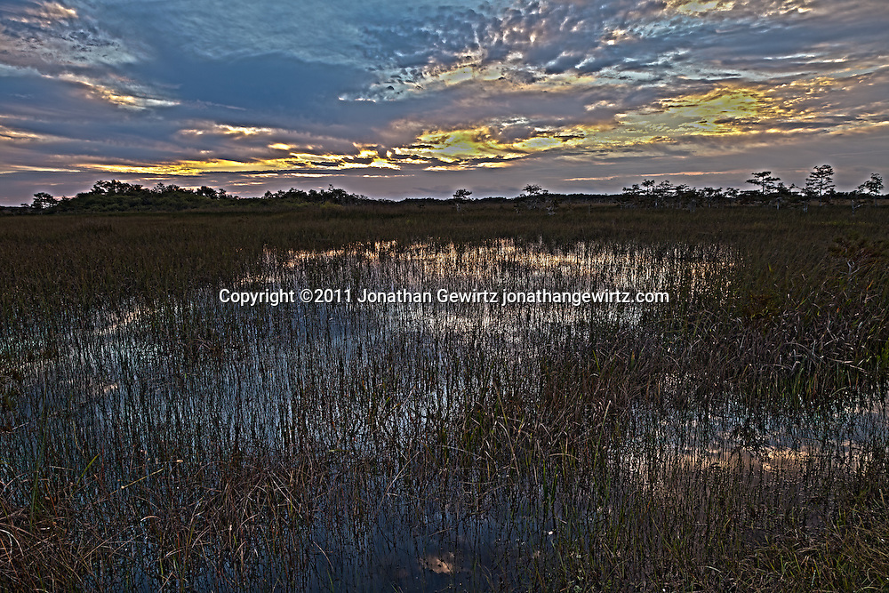 The Florida Everglades during rainy season, around sunrise, looking East from near the Pa-hay-okee Overlook. WATERMARKS WILL NOT APPEAR ON PRINTS OR LICENSED IMAGES.