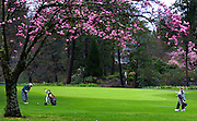 John Miles and Kyle Wilson play a round of golf beneath the flowering trees at Eastmoreland Golf Course in Portland.