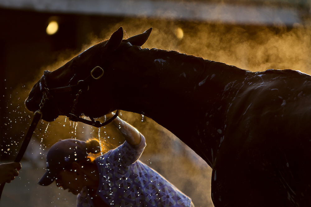 LOUISVILLE, KY - MAY 06: A horse is washed in the barn area during morning training for the Kentucky Derby at Churchill Downs on May 06, 2016 in Louisville, Kentucky. (Photo by Michael Reaves/Getty Images)A horse gets a bath in the early morning hours at Churchill Downs after morning workouts.