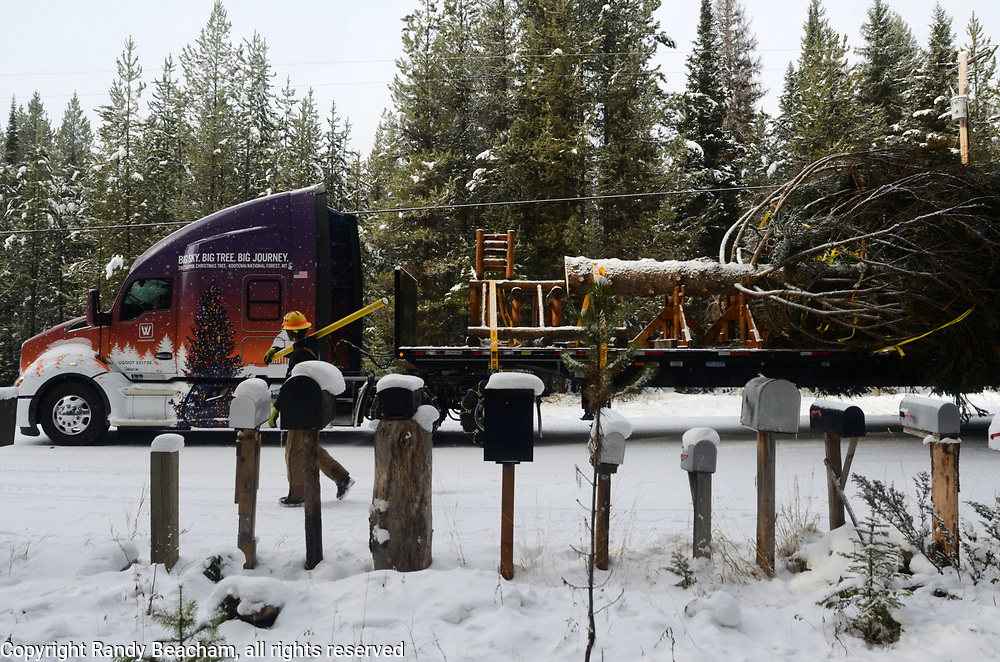 A Northern Lights Inc. employee checks power lines beside a Whitewood Transport Truck transporting the 2017 Capitol Christmas tree outside my driveway near the Historic Upper Ford Ranger Station where the engelmann spruce was cut down before transporting to Washington DC. Kootenai National Forest in the Yaak Valley, northwest Montana.