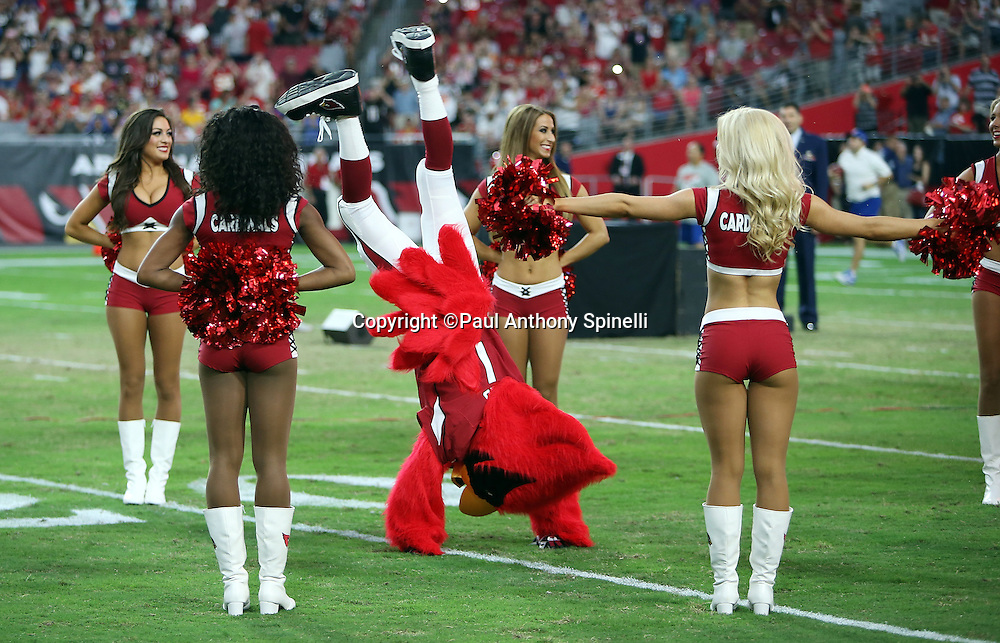 Arizona Cardinals cheerleaders line up for pregame player introductions as the Cardinals mascot, Big Red, does a flip before the 2015 NFL preseason football game against the Kansas City Chiefs on Saturday, Aug. 15, 2015 in Glendale, Ariz. The Chiefs won the game 34-19. (©Paul Anthony Spinelli)