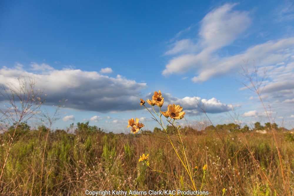 Lawther-Deer Park Prairie, in Deer Park, Texas, a native prairie that has never been plowed in the middle of residential communities.  the property was saved from development by the Bayou Land Conservancy in 2013.