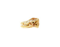 Partially mummified skull of Little Brown Bat (Myotis lucifugus.)