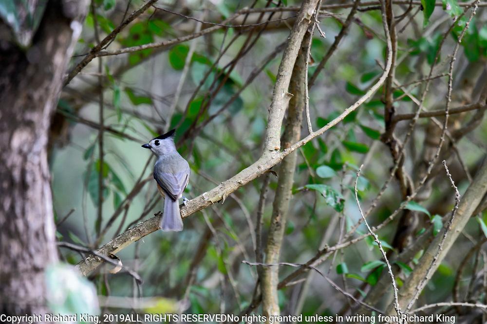 Wildlife photography from World Birding Center, McAllen, Texas, USA