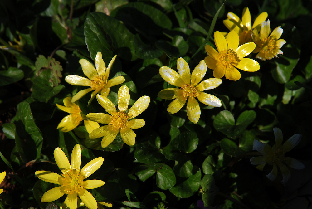 Wild flowers at Vatsounia village near Mouzaki town. Thessaly region, central Greece.