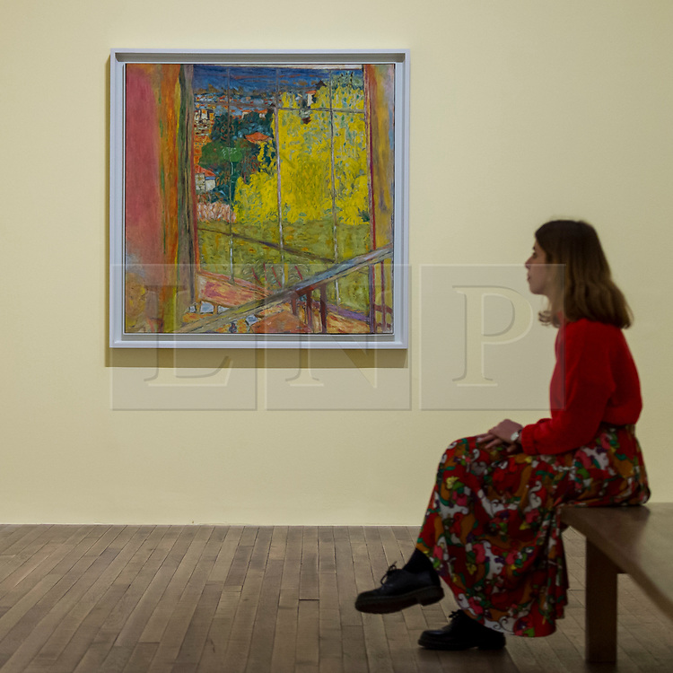 """© Licensed to London News Pictures. 21/01/2019. LONDON, UK. A staff member views """"The Studio with Mimosa"""", 1939-46, by Pierre Bonnard.  Preview of an exhibition called """"Pierre Bonnard: The Colour of Memory"""" at Tate Modern.  This is the UK's first major Pierre Bonnard exhibition in 20 years bringing together around 100 of his works from around the world covering a period from 1912 to his death in 1947.  The works are on show 23 January to 6 May 2019.  Photo credit: Stephen Chung/LNP"""