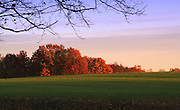 This is a shot of a hay field in the fall taken around sunset in Solsberry Indiana, USA. The trees in the background are Maples which give some of the best color in our area.