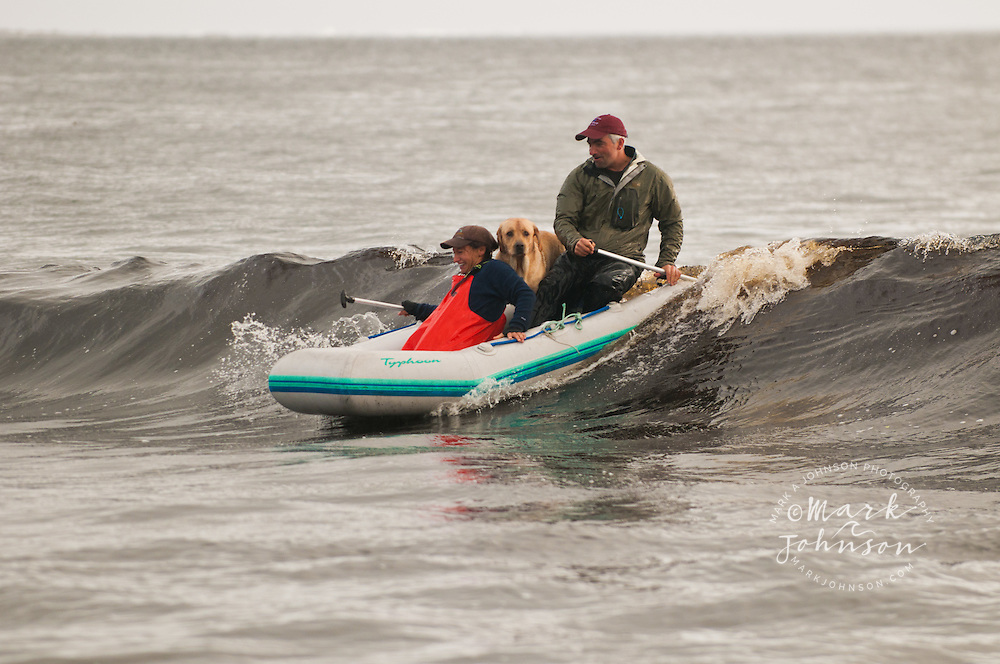 Couple surfing waves on an inflatable raft, Fred's Creek, Kruzof Island, Southeast Alaska people *****Property Release available ****Model Release available