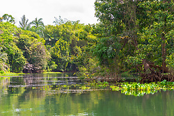 Green trees and foliage abound in a cove in a rain forest.