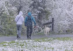 THEMENBILD - Spaziergänger mit ihrem Hund in dichtem Schneetreiben, aufgenommen am 05. Mai 2019, Kaprun, Österreich // Walker with her dog in dense snowy hustle and bustle on 2019/05/05, Kaprun, Austria. EXPA Pictures © 2019, PhotoCredit: EXPA/ Stefanie Oberhauser