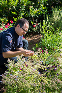 Chef Marc Collins gathers flowers from the herb garden at Circa 1886, which he will use to garnish dishes.