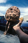 Footograph: Photograph of my right foot holding a partially eaten chocolate chip cookie in front of w woman (I think) in a cookie costume. Now that I think about it, I really do not know if that full-size cookie is male or female, but it does have nice legs.