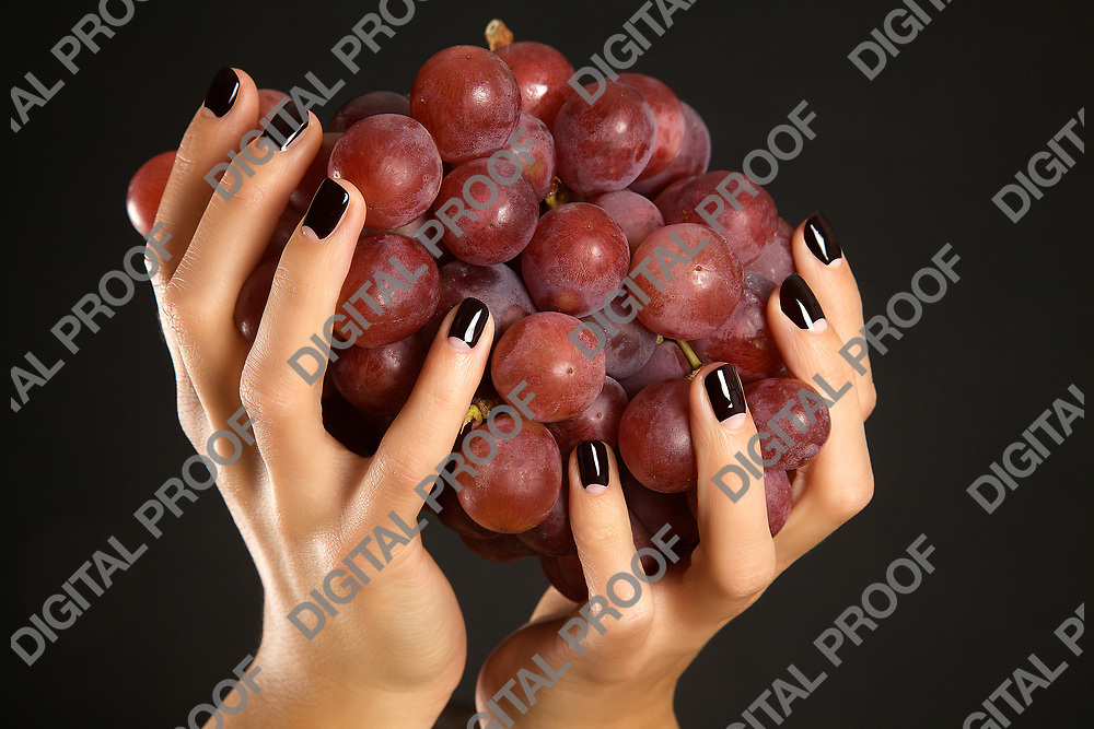 Female hands holding a bunch of red grapes in studio isolated with black background.
