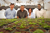 James Tuck, Joel Ducoste, Terri Long, and Cranos Williams in a phytotron greenhouse.