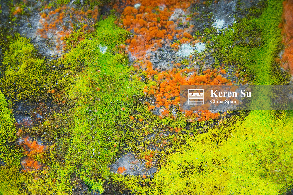 Colorful moss on the ground in the mountain, east Bhutan