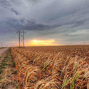 In the heat wave of summer 2011 in Kansas many non-irrigated corn fields are a loss.
