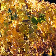 Photo d'automne à BURIE en charente-maritime