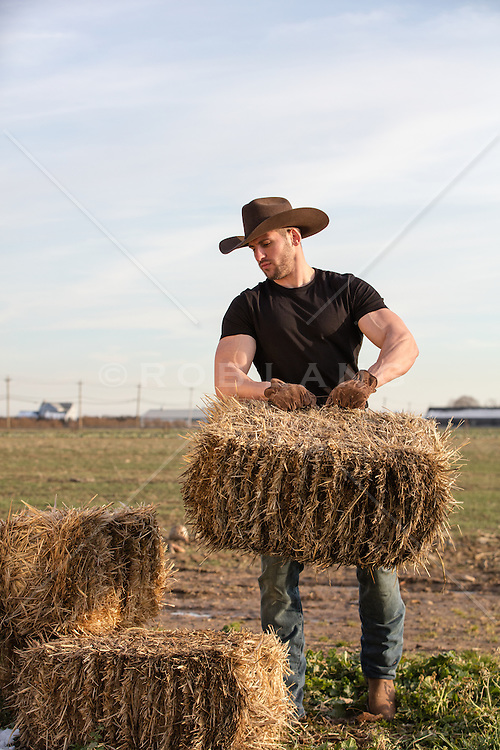 muscular cowboy lifting bales of hay on a ranch