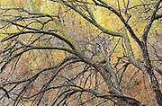 Trees in Seine River Forest. Intimate view<br /> Winnipeg<br /> Manitoba<br /> Canada