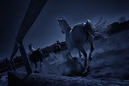 Horses running in a paddock
