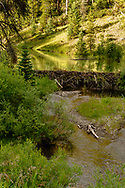 American Beaver dam, (castor canadensis), Belt Creek, south of Neihart, Montana, Lewis and Clark National Forest