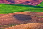The Colors of Palouse Washington