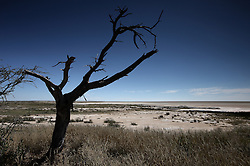 NAMIBIA ETOSHA 30APR14 - Landscape in the salt pan of Etosha National Park, Namibia.<br /> <br /> <br /> <br /> jre/Photo by Jiri Rezac<br /> <br /> <br /> <br /> &copy; Jiri Rezac 2014