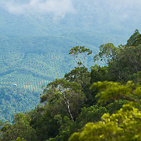 View of an oil palm plantation stretching into the distance, Gunung Silam, Sabah, Malaysia, Borneo, South East Asia.