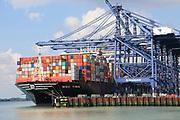 MSC Tina container ship cranes unloading at quayside, Port of Felixstowe, Suffolk, England, UK