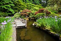 Iris-Lined Pond in Portland Japanese Garden, Portland, Oregon