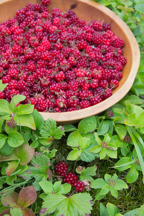 A bowl of red nagoonberries.