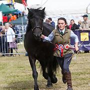CR0002852 Kinross Show. Erica Hood with Knockandy Abigail, Champion Highland Pony. 11 Aug 2018 © Copyright photograph by Tina Norris. Contact Tina on 07775 593 830 info@tinanorris.co.uk All print sales via Tina Norris. www.tinanorris.co.uk http://tinanorris.photoshelter.com