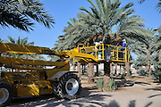 Desert agriculture. Hydraulic platform for picking dates photographed in Israel, Aravah, Paran,