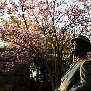 A statue of President Franklin Delano Roosevelt at the FDR Memorial on the banks of the Tidal Basin in Washingotn DC catches the very early morning sunlight, with a Tulip Magnolia flowering in the background.