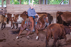 September 23, 2017 - Minshall Farm Cutting 5, held at Minshall Farms, Hillsburgh Ontario. The event was put on by the Ontario Cutting Horse Association. Riding in the $25,000 Noivce Horse Class is Scott Reed on LL Crocket Rocket owned by the rider.