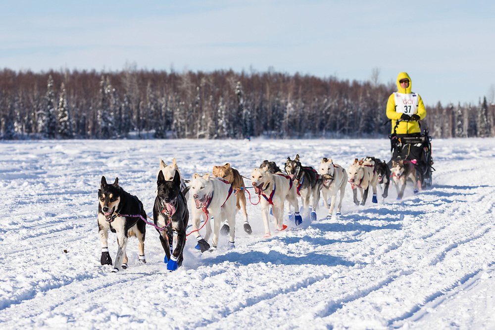 Musher Brett Bruggeman after the restart in Willow of the 46th Iditarod Trail Sled Dog Race in Southcentral Alaska.  Afternoon. Winter.