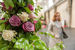 © Licensed to London News Pictures. 03/06/2016. London, UK. The second annual London Rose Show, hosted by the Royal Horticultural Society, opens at the Horticultural Halls in Victoria, where rose growers are showing off their latest blooms. Photo credit : Stephen Chung/LNP