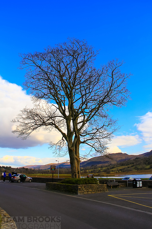 A lone tree next to the car park for Glencar Waterfall
