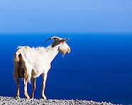 Animals of Crete
