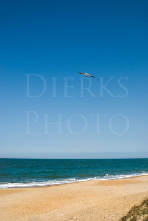 Lone seagull gliding against full blue sky at the beach.