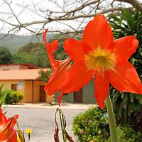Flor en el pueblo de Chuao, Edo. Aragua, Venezuela