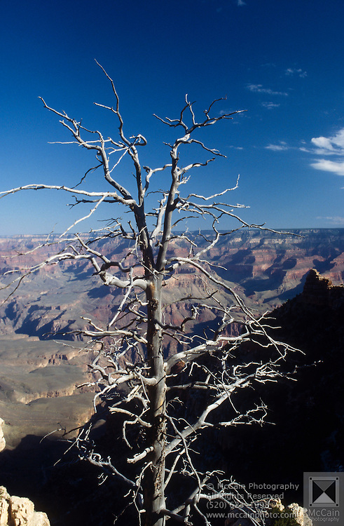 Dead tree skeleton with canyon behind, Mather Point, Grand Canyon National Park, Arizona...Subject photograph(s) are copyright Edward McCain. All rights are reserved except those specifically granted by Edward McCain in writing prior to publication...McCain Photography.211 S 4th Avenue.Tucson, AZ 85701-2103.(520) 623-1998.mobile: (520) 990-0999.fax: (520) 623-1190.http://www.mccainphoto.com.edward@mccainphoto.com.