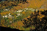 France, Languedoc-Roussillon, Cevennes, Gard(30), vallée du Rieutord, chataigneraie a l'automne
