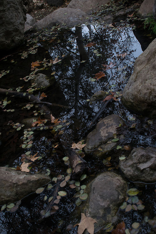 Peaceful winter creek with reflections and fallen leaves. Santa Monica Mountains, Solstice Canyon, CA 1.15.16