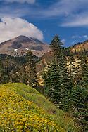 Wildflowers in summer below Lassen Peak, Lassen Volcanic National Park, California