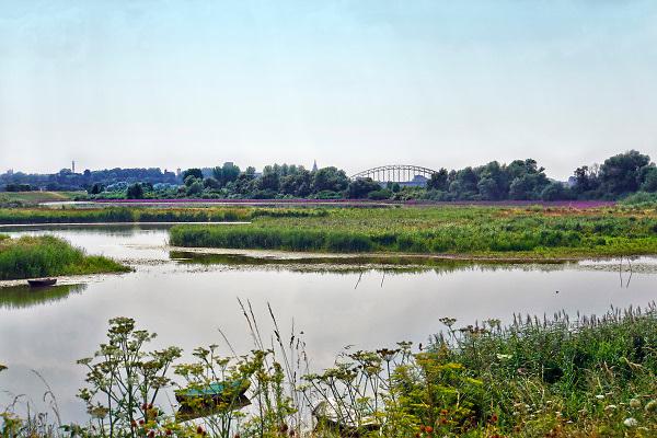 Nederland, Nijmegen, 26-7-2018Het peil in de Oude Waal, een dode rivierarm van de rivier,staat nog relatief hoog vanwege het hoge water in januari waardoor hij helemaal volstroomde. Hoogwater, laagwater .Foto: Flip Franssen