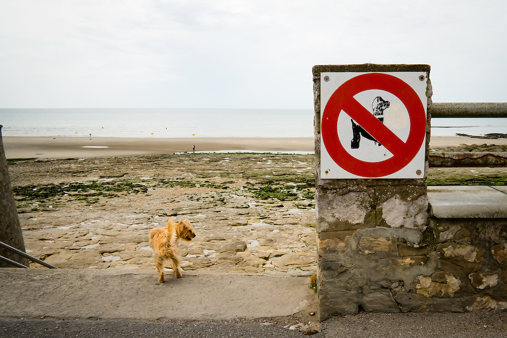 Dog breaking the 'no dogs' policy on a beach in Wimereux, France