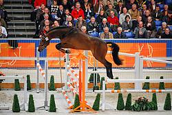 113 - Bontendro A<br /> KWPN Hengstenkeuring 2009<br /> Photo© Dirk Caremans