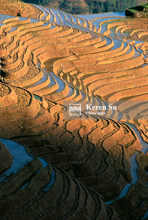 Landscape of terraced rice paddies filled with water in the mountain, Longsheng, Guangxi Province, China